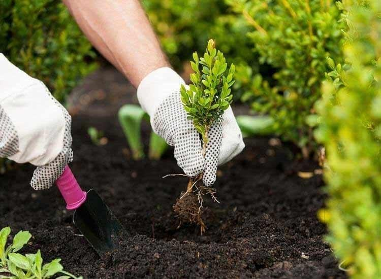 How Landscaping Companies Help People by Their Services